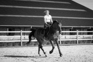 Marie et le dressage du cheval Chronos 18-9-2018 Aurore Delsoir Photographe d'entreprise en Bruxelles et en Wallonie