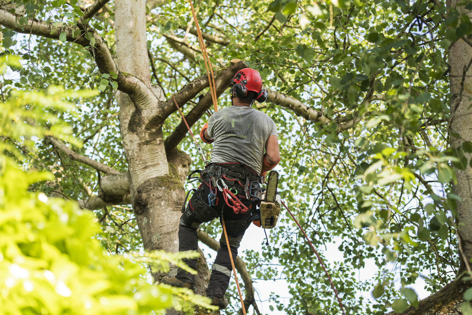 Cordée et sécurité, portrait d'entrepreneur de Nico l'arboriste par Aurore Delsoir photographe d'entreprise