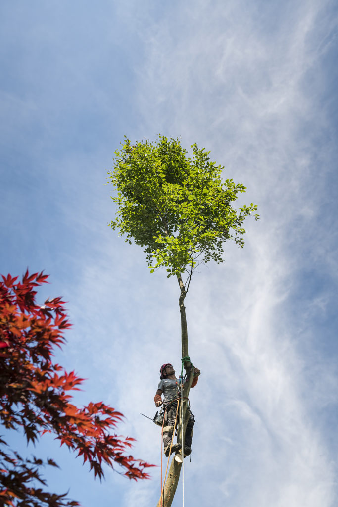 Sous les frondaisons, portrait de Nico l'arboriste, par Aurore Delsoir photographe d'entreprise
